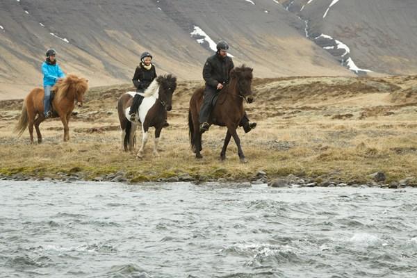 Horses at Riverside