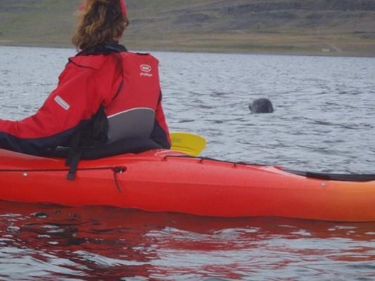 Rauður kayak og selur.JPG