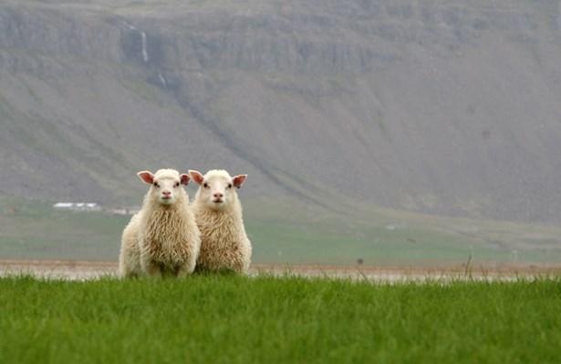 Haukur Vestfirðir 2006 (9).jpg