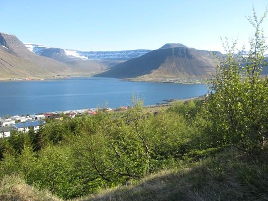 Ísafjörður from hillside