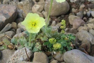 Plants Helga 4.png