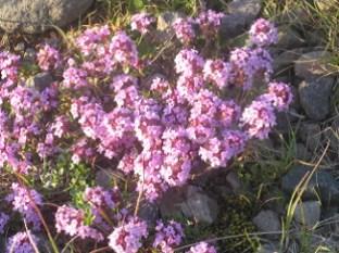 Plants Helga 5.png