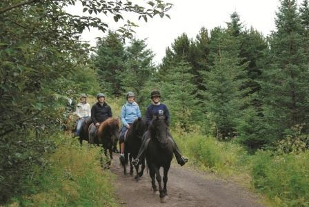 IT Lava tour horseriding